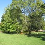 CG - Hardwood grove