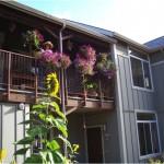CoHo vertical garden